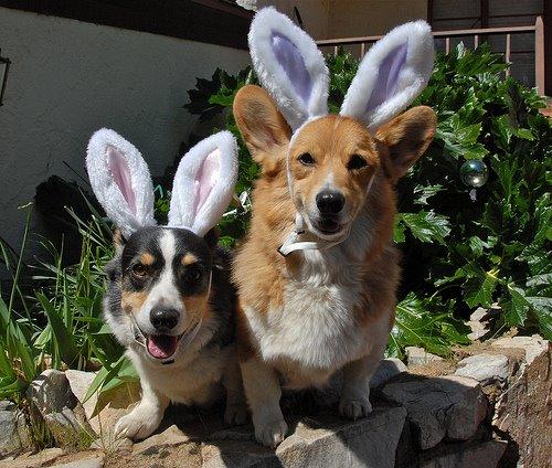 Cachorros na páscoa vestidos de coelho