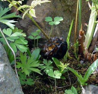 Rock Garden Blooms Increasing