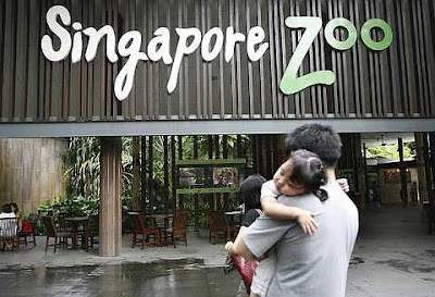 Tiger Attack Singapore Picture on Plus Size Kitten  Tiger Attacks Man In Singapore Zoo