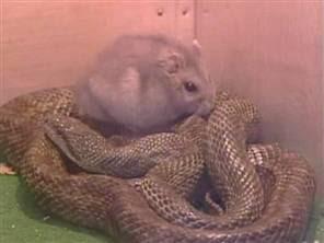 Gohan VS serpent