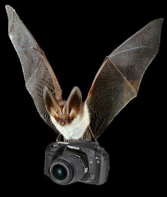 Vampires photographes