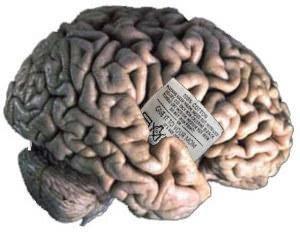 Cerveau lavable en machine