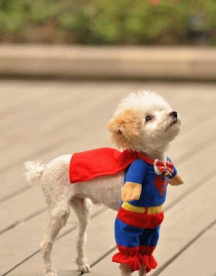 Superchien