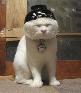 Chinese Cat?