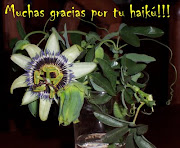 Gracias Maracuya