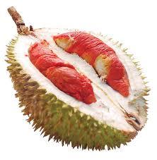 44 25 Buah Langka Dari Kalimantan
