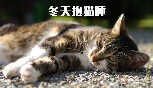 冬天抱猫睡