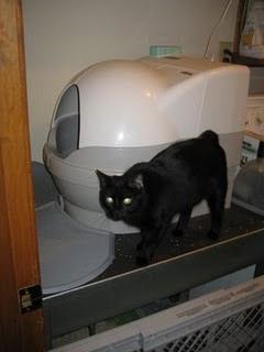 Scribble Cat Genie 18 Months Post Installation