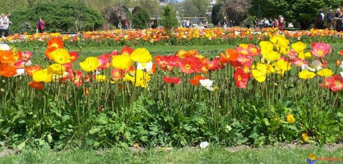 Los diferentes tipos de plantas for Hierba jardin