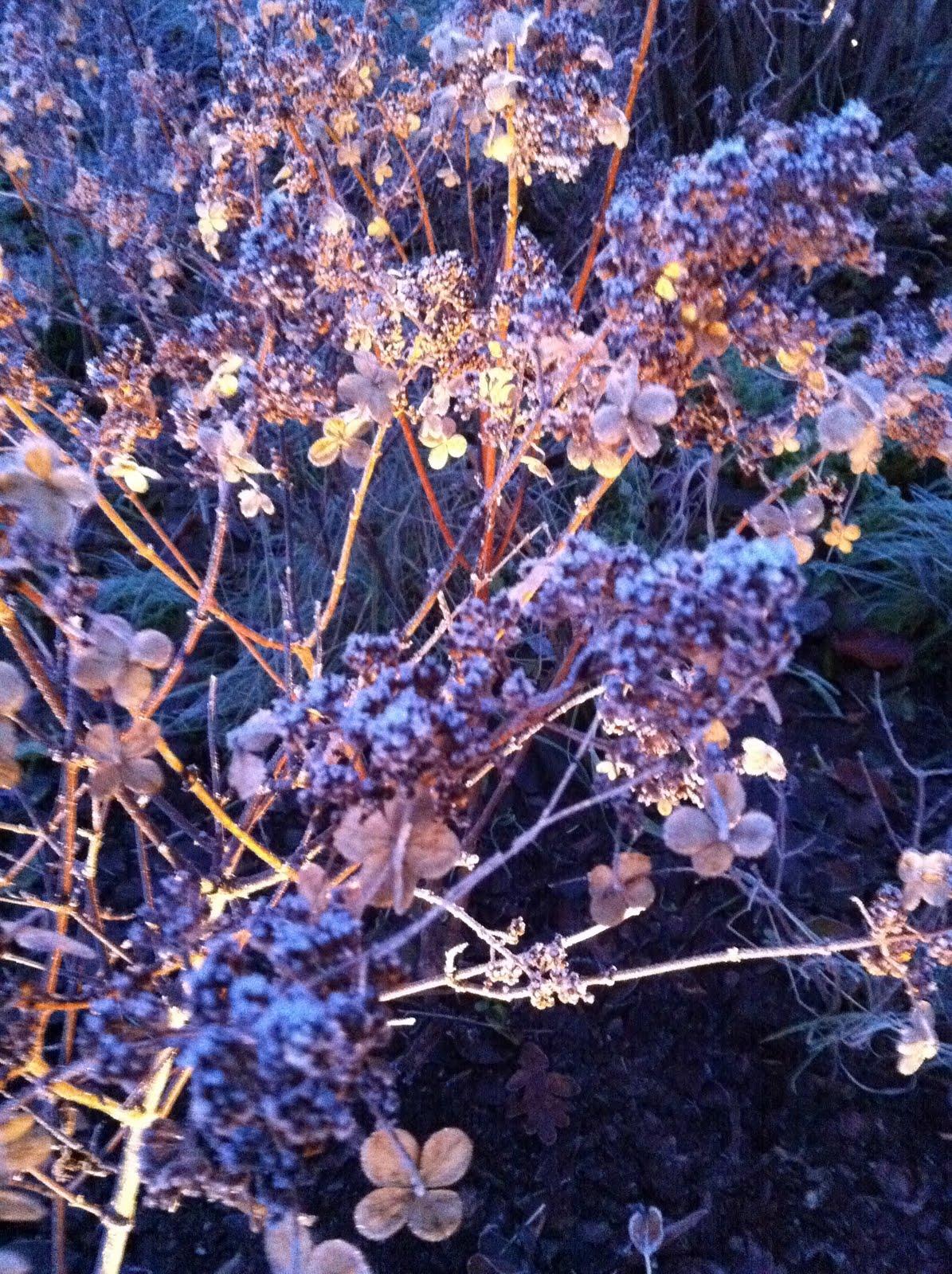 Njut i din trädgård: november 2010