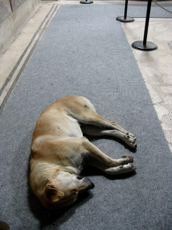 Adopt Stray Dog Skyrim