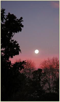 Marietta Moon