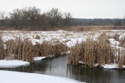 Walking By Wingra Creek In Snow >> Save Our Stream Exploring Lake Wingra In Winter