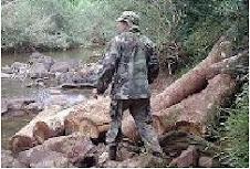 El apeo ilegal de madera nativa arrasa la selva de la Biósfera Yabotí