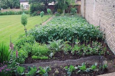 Small Vegetable Garden Design on Garden Contemporary  Vegetable Garden Design