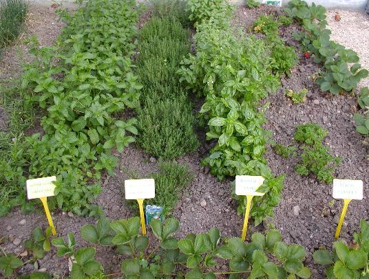 Herb Garden Design Plans