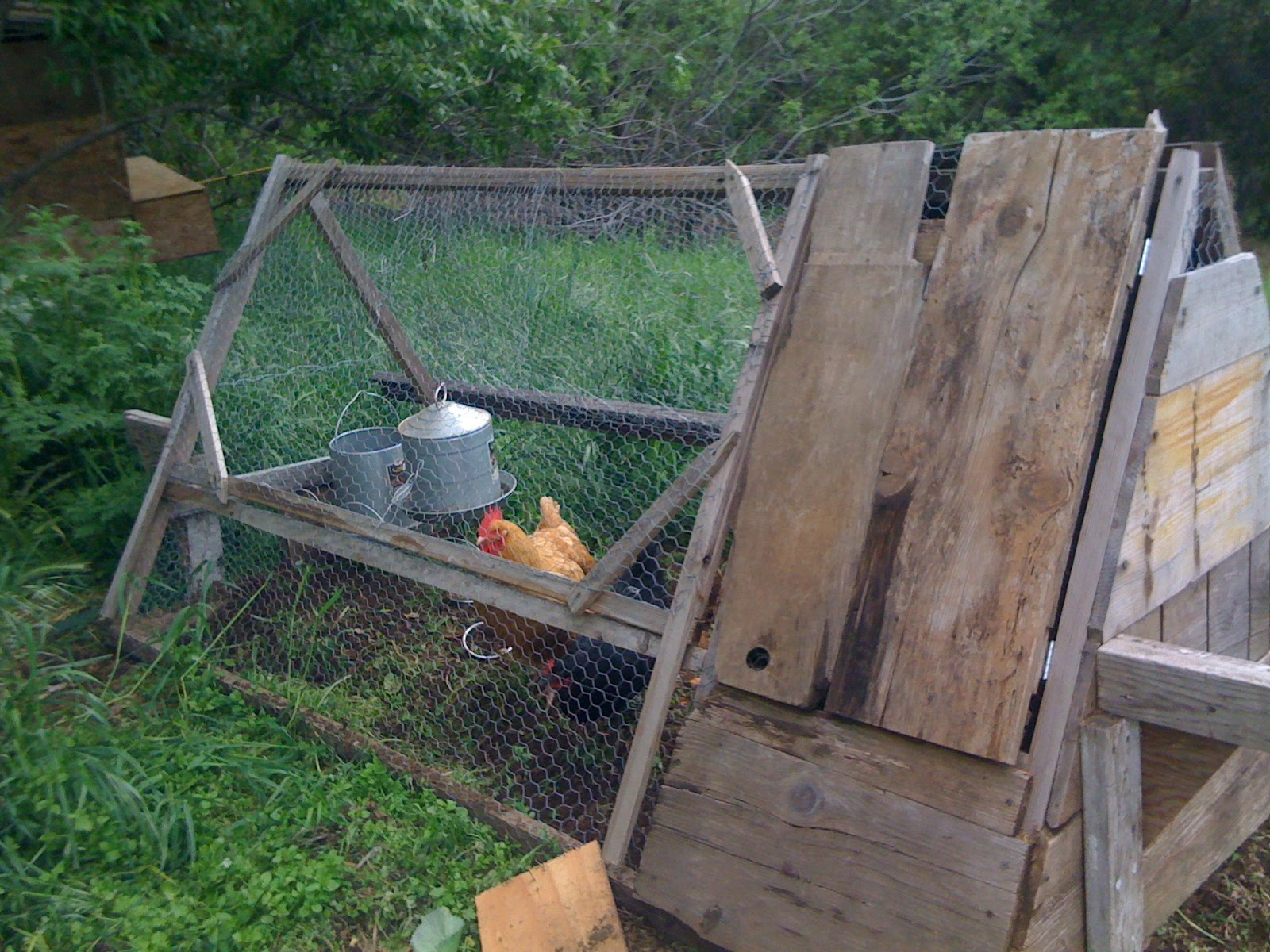 Homestead mama spring is in the air for Big chicken tractor
