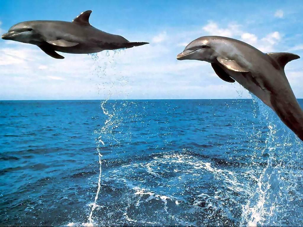 [dolphin1.JPG]
