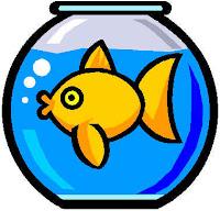 povero pesce