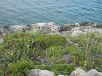 Isola di Dugi Otok