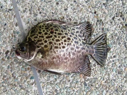 Tips Memancing Ikan Agar dapat ikan yang banyak