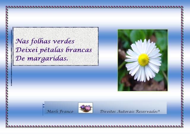 Folhas I Imagem+8