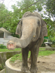 Siti the Elephant