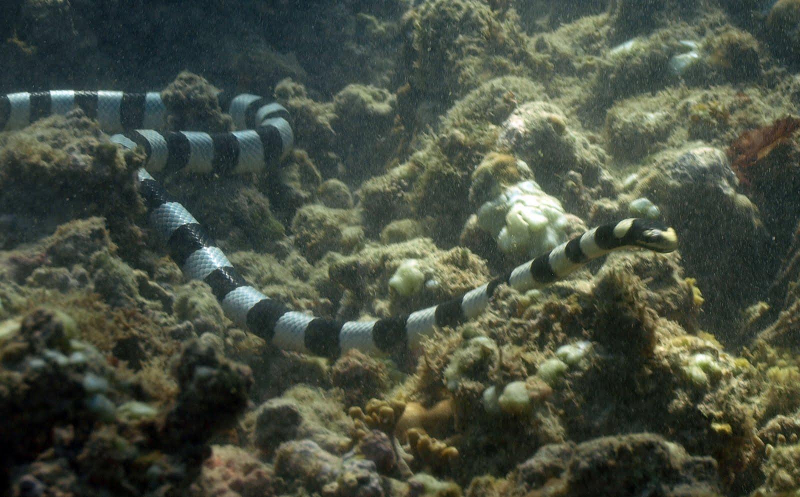 moreia vs cobra marinha Serpiente%2B6