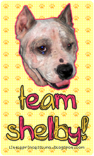 Support Team Shelby