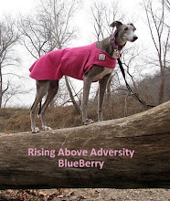 Let's help Blueberry rise above adversity!