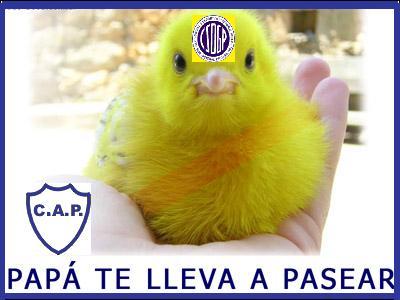 DE: blancopasion@ciudad.com.ar