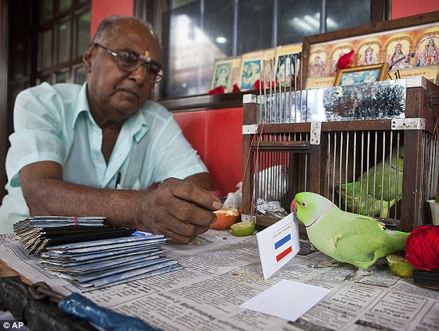 Mani+psychic+parakeet+Singapore+world+cup
