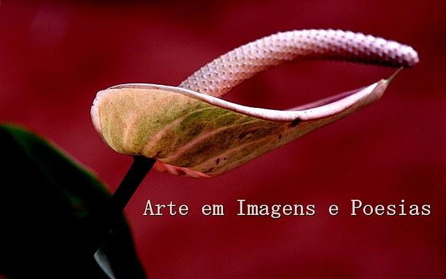 Arte em imagens e poesias