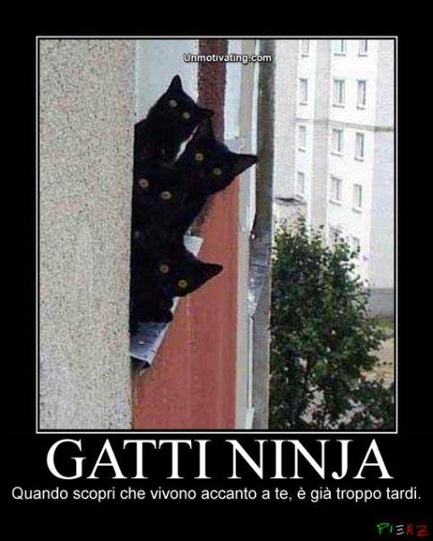 L'impianto di Colombo Riccardo - Pagina 3 Gatti+ninja