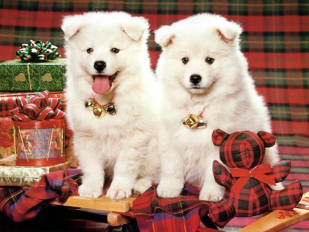 Božićne slike čestitke besplatne pozadine free download e-cards ...