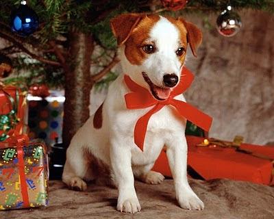 Božićne slike čestitke besplatne pozadine za desktop download free e-cards Christmas