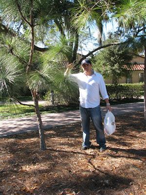 longleaf pine planting