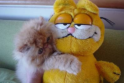 cat hugging garfield