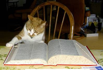 cat reading bible