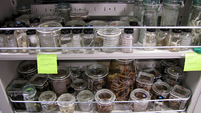 invertebrate zoology collection