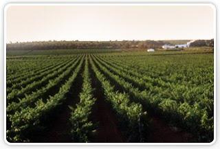 Enoturismo valencia.Ruta del vino en Valencia