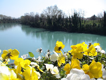 Bloom on River Piave