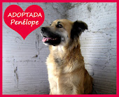 Penélope ADOPTADA!
