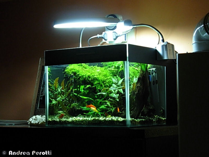 Aqua experience vasca per accrescimento avannotti for Temperatura acquario