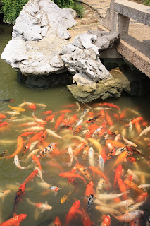 Tongli fish @ shanghaid away