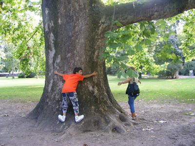 Blogul lui Joker:Vestitii copaci cu tulpina groasa de pe Insula Margareta