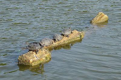 turtle animal pics
