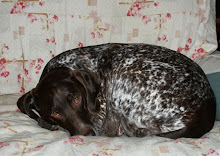 Spotty Dog