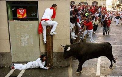 funny bull angry