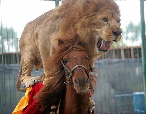 [lion.jpg]